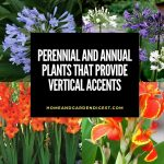 Upright Growing Container Plants: Perennial and Annual Plants that Provide Vertical Accents