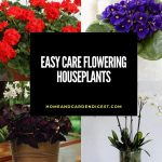 Easy Care Flowering Houseplants