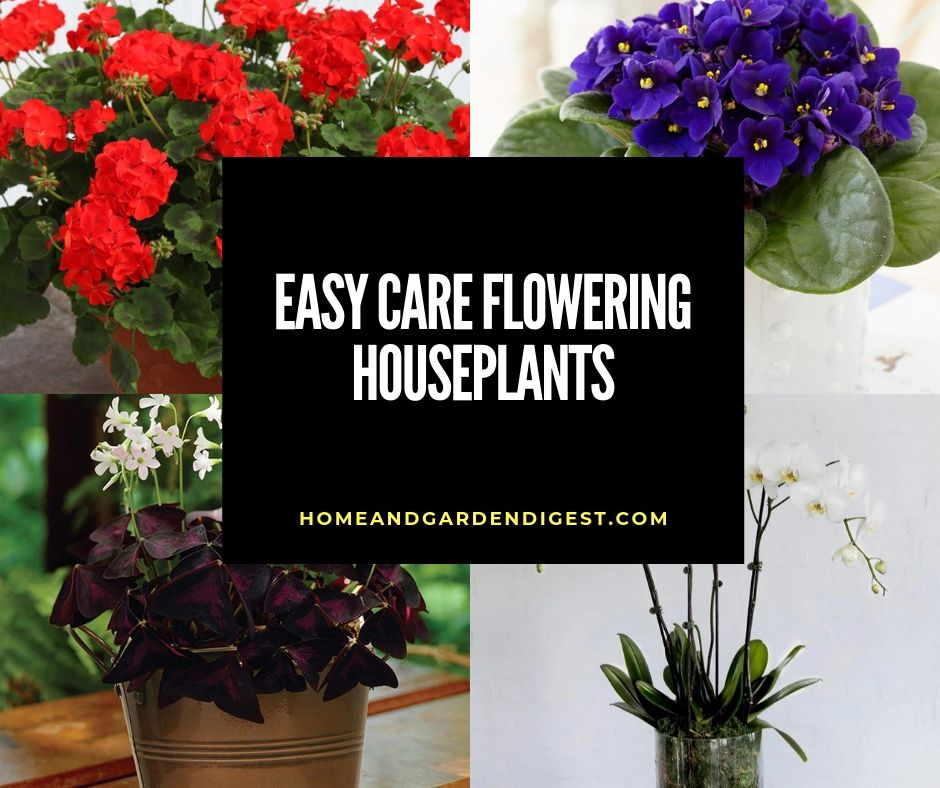 Easy Care Flowering Houseplants Home And Garden Digest