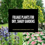Foliage Plants for Dry, Shady Gardens