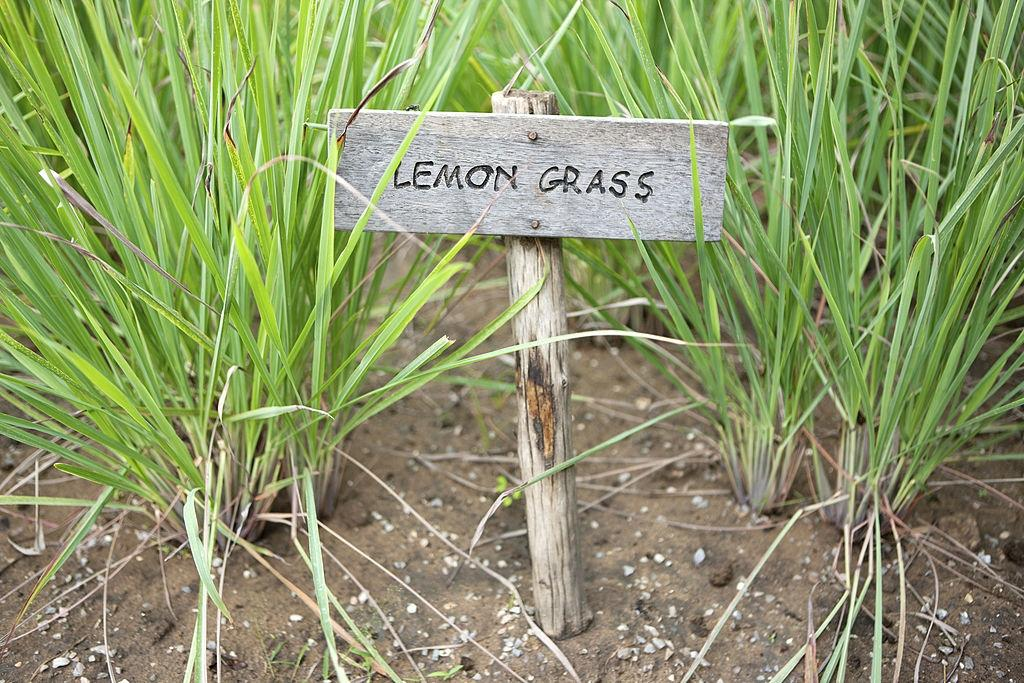 Lemongrass - Plants that repel roaches