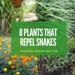 8 Plants that Repel Snakes