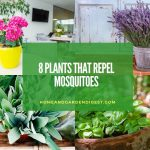8 Plants That Repel Mosquitoes
