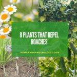 8 Plants that Repel Roaches