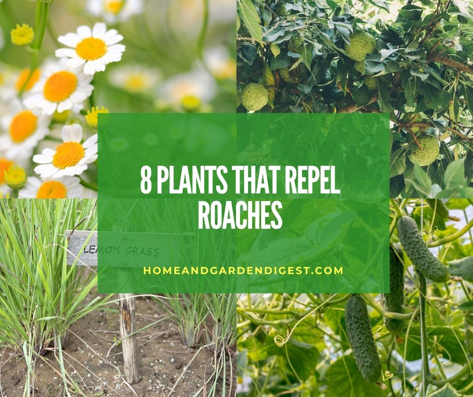 Top 8 Plants That Repel Roaches Naturally Home And Garden Digest