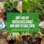 Why Are My Succulents Dying?