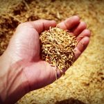 Tips and Tricks for Adding More Whole Grains to Family's Diet During the Holiday Season
