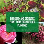 Shrubs in Garden Designs: Evergreen and Deciduous Plant Types for Mixed Bed Plantings