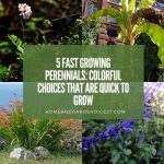 5 Fast Growing Perennials: Colorful Choices that are Quick to Grow