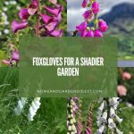 Foxgloves for a Shadier Garden: Height and Bright Color in the Border