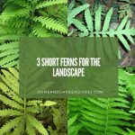 3 Short Ferns for the Landscape: Grow Under Two Feet Tall