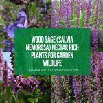 Wood Sage Nectar Rich Plants for Garden Wildlife