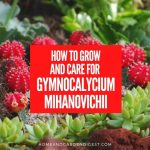 How To Grow and Care For Gymnocalycium Mihanovichii (Moon Cactus)