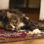 Common Misconceptions about Carpet Removal Service