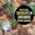 How To Plant Succulents In Containers Without Drainage