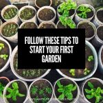Follow These Tips to Start Your First Garden